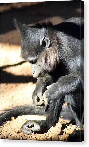 Where Is My Comb Canvas Print by Dick Botkin