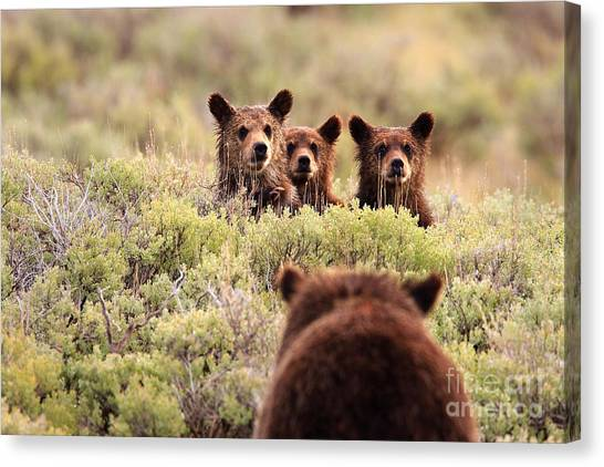 Where Is Your Brother Canvas Print
