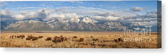 Where The Buffalo Roam 2 Canvas Print