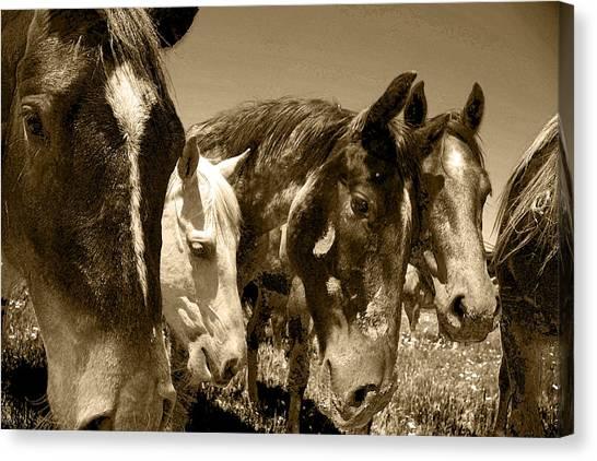 Whimsical Stallions Canvas Print
