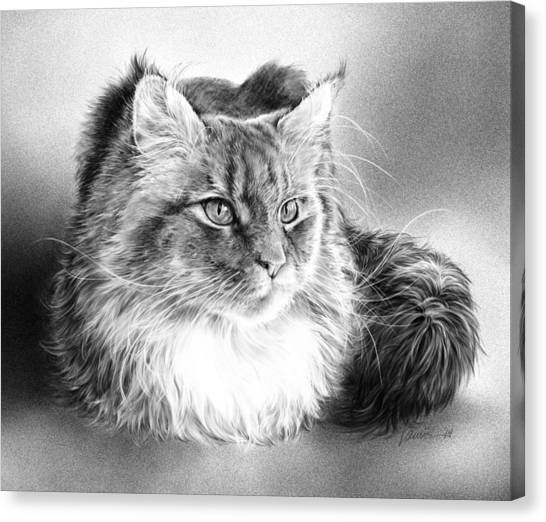 Main Coons Canvas Print - Those Whiskers by Laurie Musser