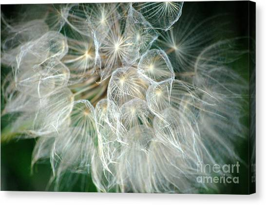 Whisper Canvas Print