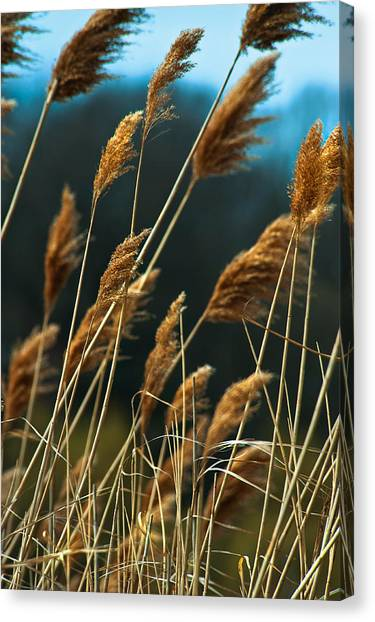 Whistling Wind Canvas Print by Mike Feraco