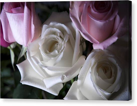White And Pink Roses Canvas Print
