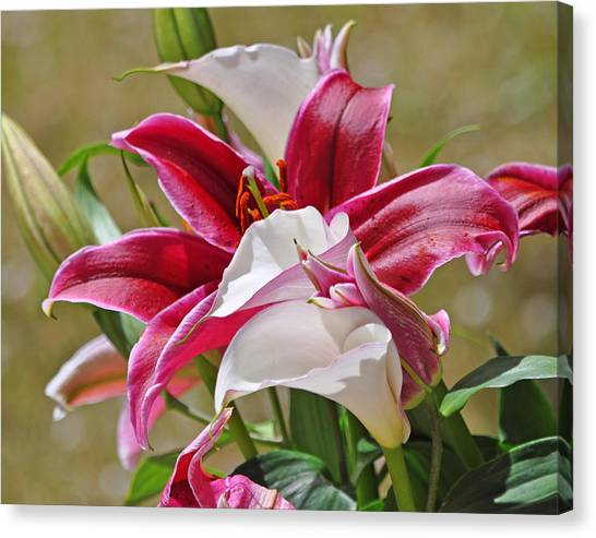 White And Red Lilies Canvas Print