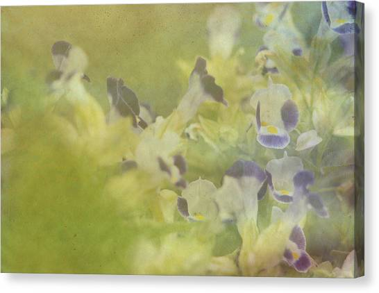 White And Violet Flowers Canvas Print