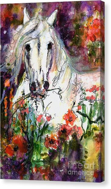 White Andalusian Stallion In Poppy Field Painting By Ginette Canvas Print