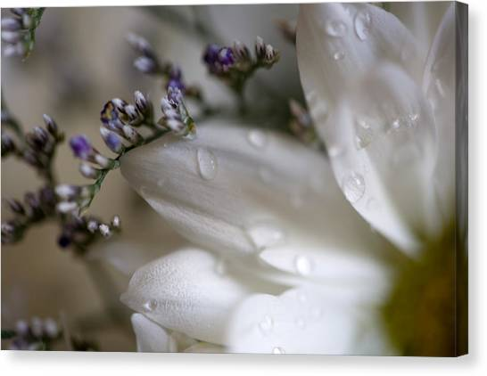 White Beauty Canvas Print by John Holloway