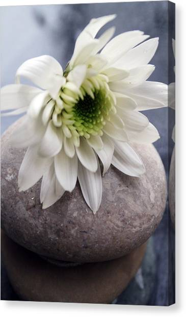 Zen Rocks Canvas Print - White Blossom On Rocks by Linda Woods