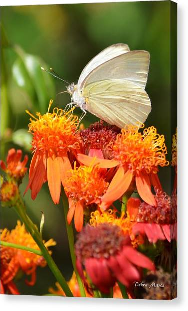 White Butterfly On Mexican Flame Canvas Print