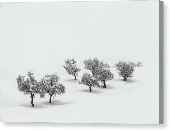 Winter Canvas Print - White Carpet by Antonio Carrillo Lopez