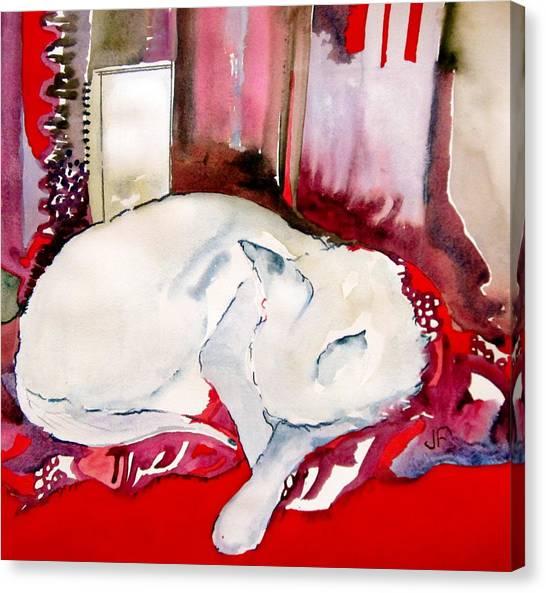 Canvas Print - White Cat by Jane Ferguson