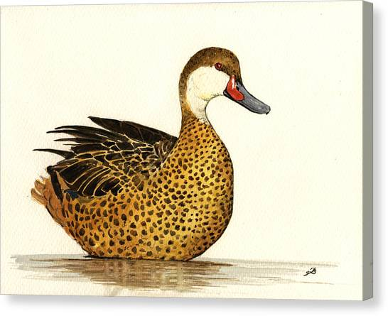 Ducks Canvas Print - White Cheeked Pintail by Juan  Bosco