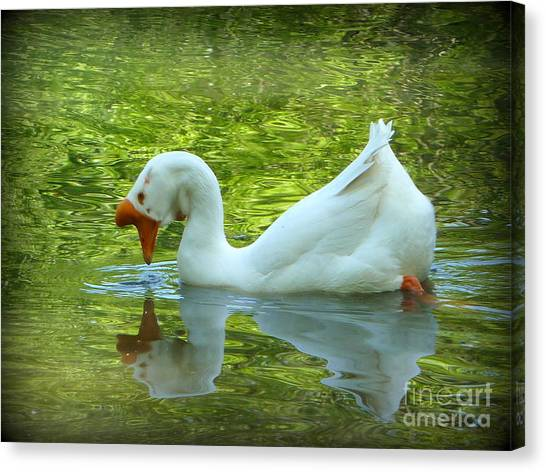 White Chinese Goose Curtsy  Canvas Print