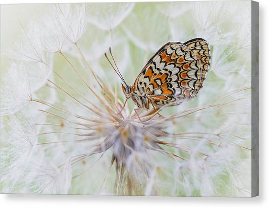 Bug Canvas Print - White Cloud by Roberto Marini