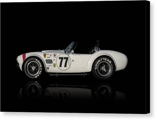 Cobras Canvas Print - White Cobra by Douglas Pittman