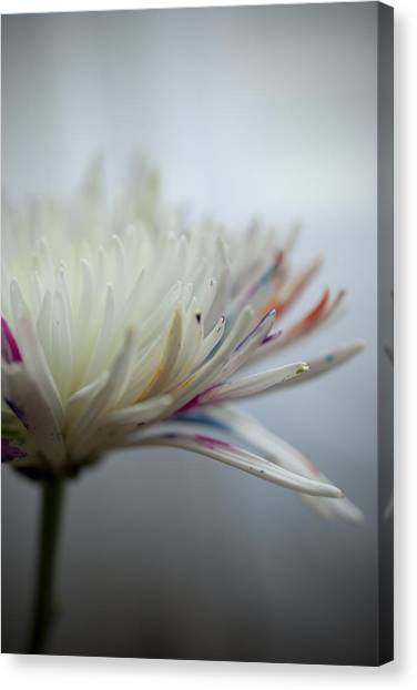 White Colors Canvas Print