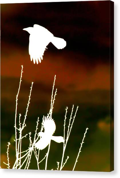 White Crow And The Bluejay Canvas Print