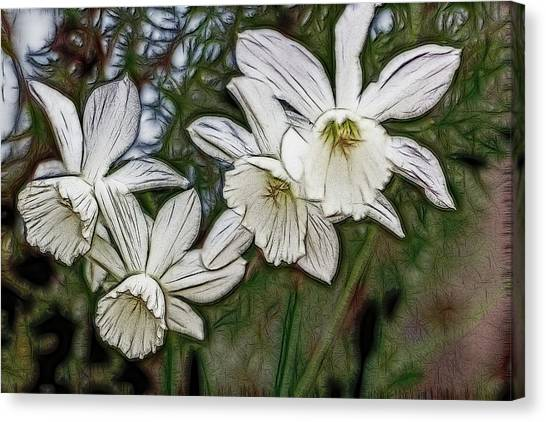 White Daffodil Flowers Canvas Print