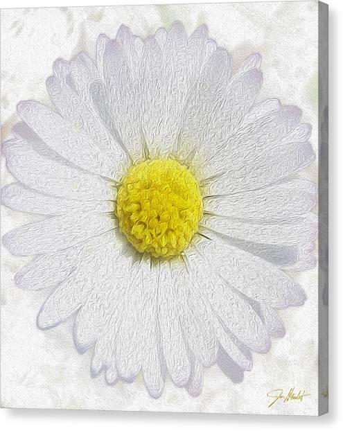 Blossom Canvas Print - White Daisy On White by Jon Neidert