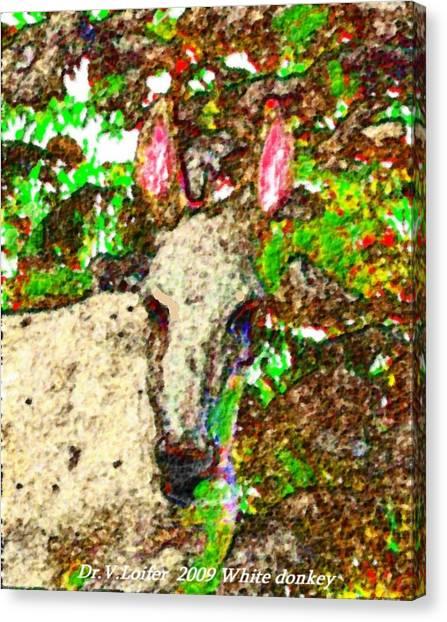 White Donkey-owner Of Hills Canvas Print by Dr Loifer Vladimir
