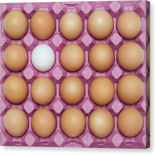 White Egg With Large Group Of Brown Canvas Print by Ozgur Donmaz