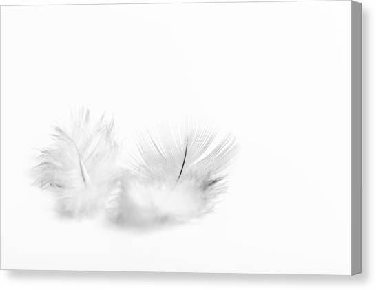 Canvas Print featuring the photograph White Feathers by Gary Gillette