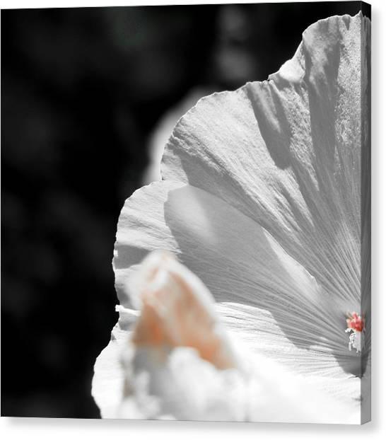 White Flower Detail Canvas Print