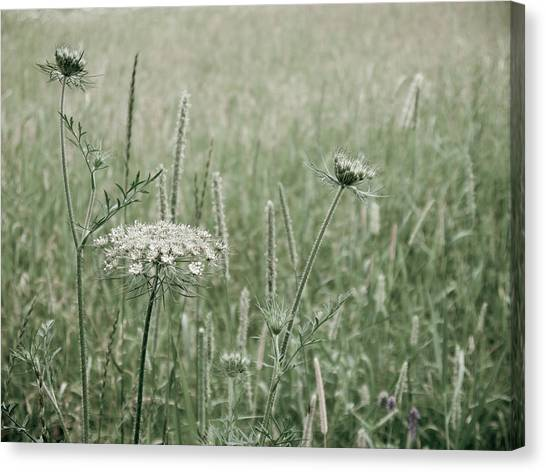 White Flower In A Meadow Canvas Print