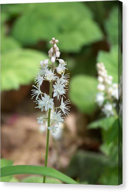 White Flowers Canvas Print by Brittany Gandee