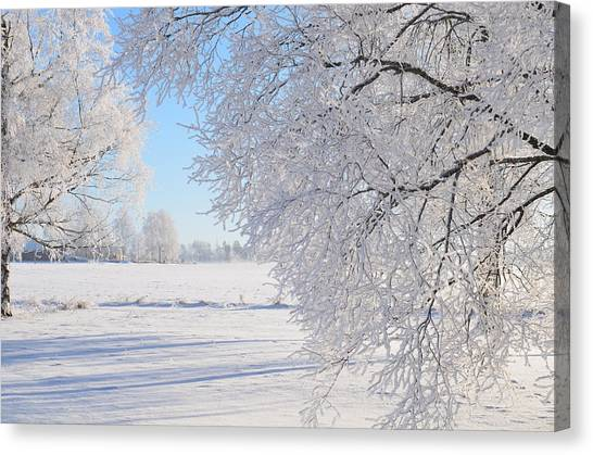 White Frost Canvas Print by Conny Sjostrom