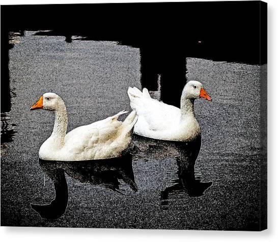 White Geese Canvas Print