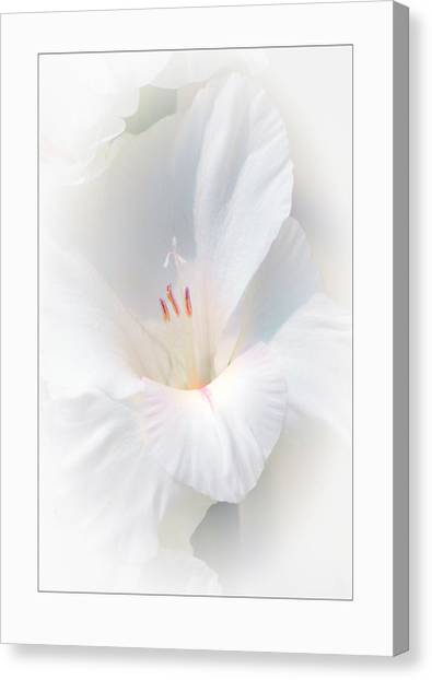White Glad Canvas Print