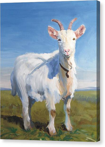 White Goat Canvas Print