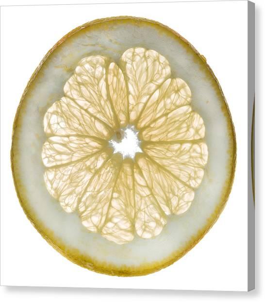 Grapefruits Canvas Print - White Grapefruit Slice by Steve Gadomski