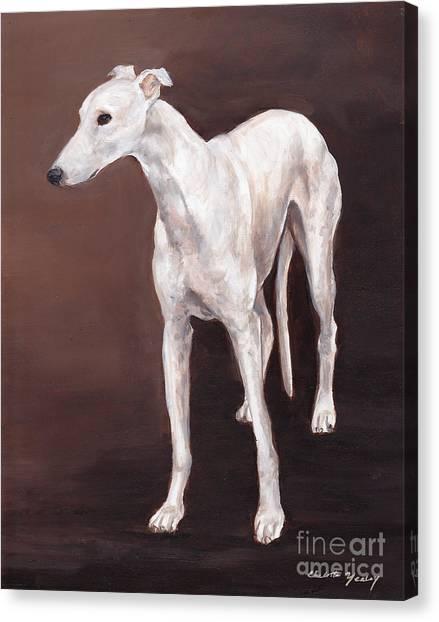 White Greyhound Canvas Print by Charlotte Yealey