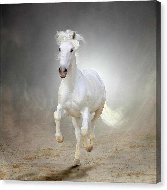 White Horse Galloping Canvas Print by Christiana Stawski