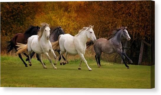 White Horse Vale Lipizzans Canvas Print