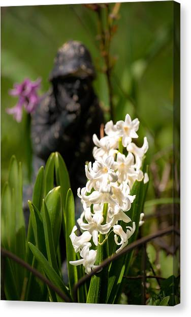 White Hyacinth In The Garden Canvas Print