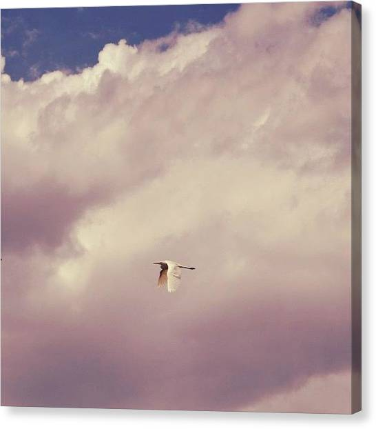 Ibis Canvas Print - White Ibis In The Clouds #whiteibis by Anna Bamgartner