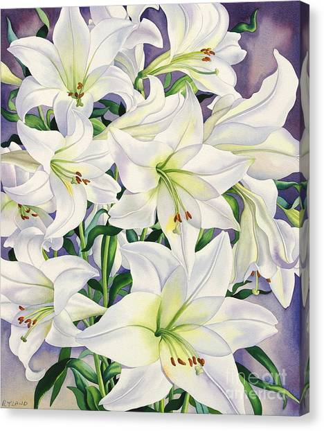 Lily Canvas Print - White Lilies by Christopher Ryland