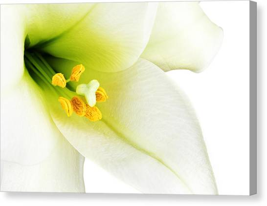 Open Canvas Print - White Lilly Macro by Johan Swanepoel
