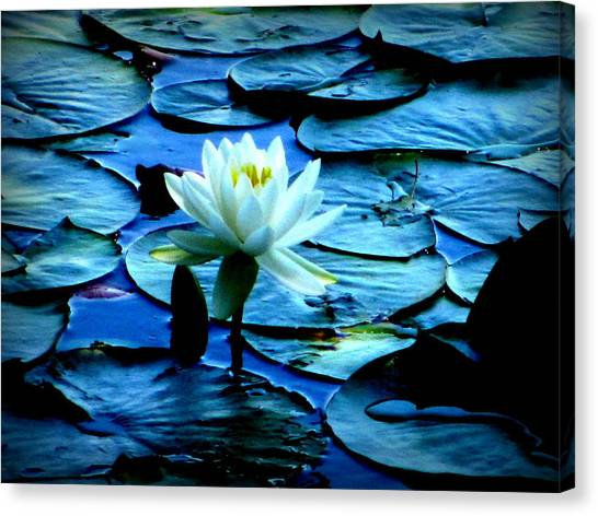 White Lily Canvas Print by Maria Scarfone