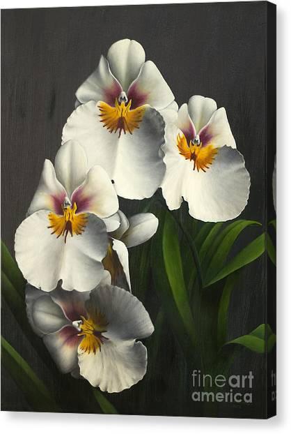 Canvas Print - White Magic by Peggy McKinsey