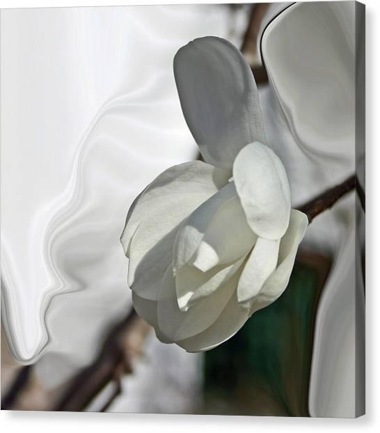 White Magnolia Series 510 Canvas Print