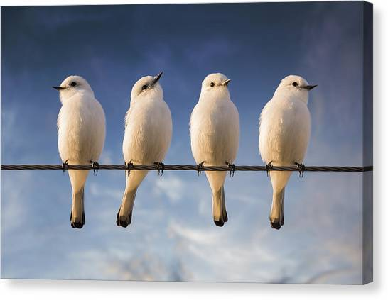 Dove Canvas Print - White Monjita by Chechi Peinado