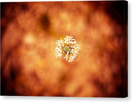 White On Orange Canvas Print