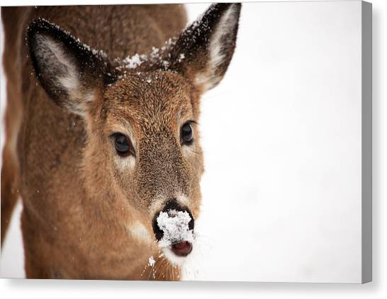 White On The Nose Canvas Print