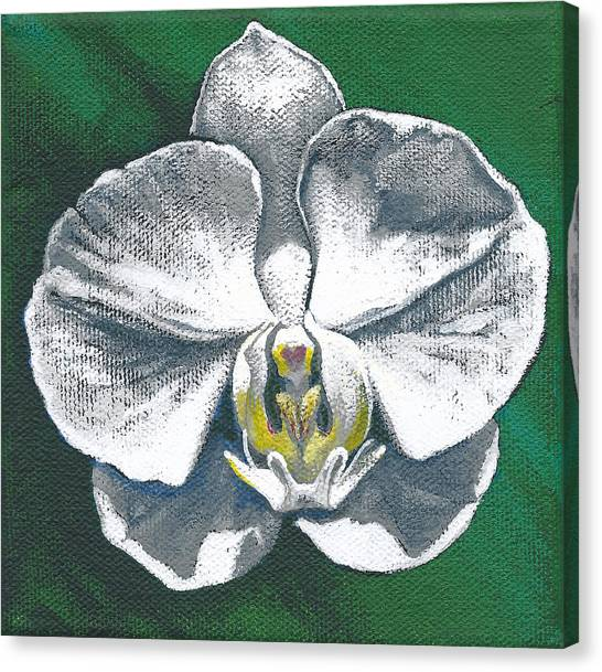 White Orchid I Canvas Print