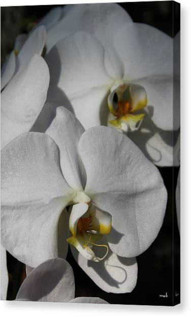 White Orchid Canvas Print by Mark Steven Burhart
